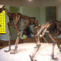 La Brea Tar Pits & Page Museum